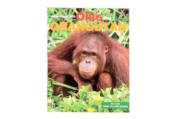 Ollie the Orangutan