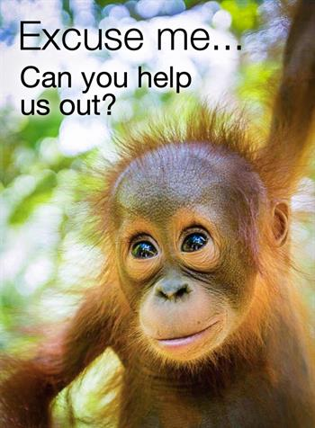 Roll up, roll up…… Perth Zoo Royal show volunteers needed - The