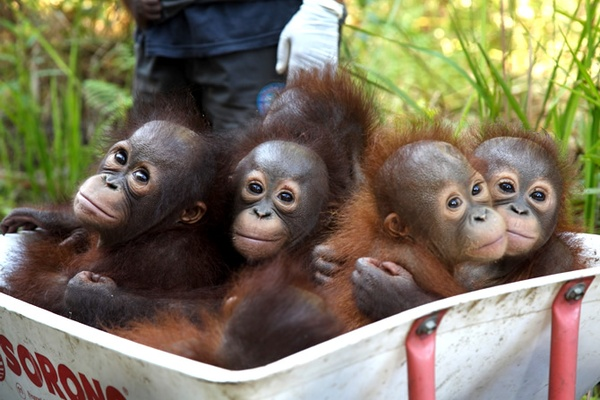 Home Page - The Orangutan Project