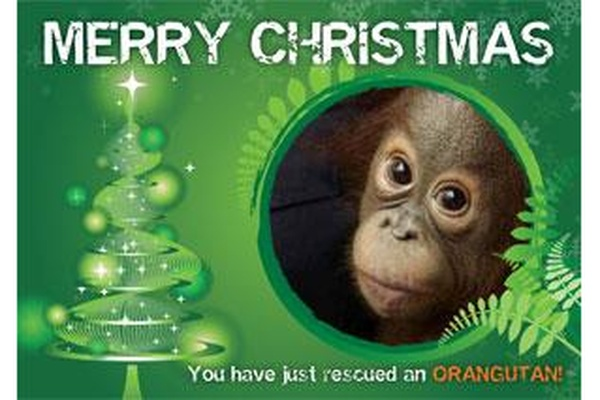 Christmas Gift Card - 12 months medicine for an orangutan