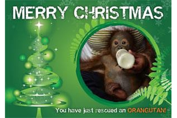 Christmas Gift Card - 30 orangutans fed for a month